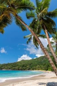 Hawaii & Exotic Cruises